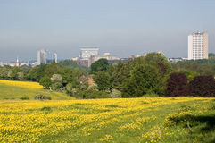 Basingstoke with Buttercups. A view of the Hampshire town of Basingstoke from buttercup filled meadows Royalty Free Stock Photography