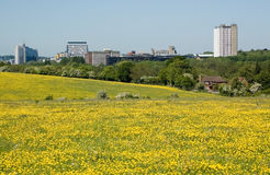 Basingstoke with buttercups Royalty Free Stock Images