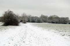 Basingstoke Gemeenschappelijk met Sneeuw Royalty-vrije Stock Afbeeldingen