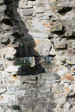 Basingwerk修道院历史的废墟在未开发的地区,在Holywell北部威尔士附近 库存图片
