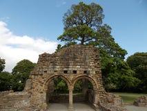 Basingwerk abbotskloster royaltyfria foton