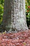 Basis der Palme kleine Wurzeln zeigend Stockbilder