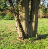 Basis van een boom Royalty-vrije Stock Afbeeldingen