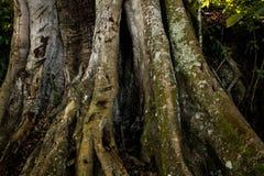 Basis van een boomstam Stock Fotografie