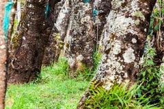 Basis von Bäumen und von grünem Gras Stockbild