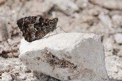 Schmetterling auf Stein Lizenzfreie Stockfotos
