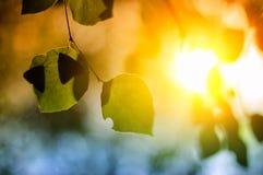 Basisrecheneinheit auf Blättern Stockfoto
