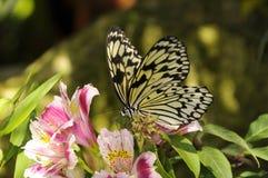 Basisrecheneinheit auf Blume Lizenzfreies Stockbild