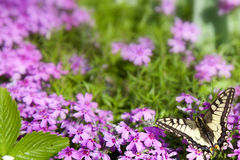 Basisrecheneinheit auf Blume Lizenzfreies Stockfoto