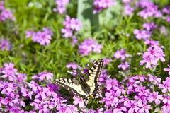 Basisrecheneinheit auf Blume stockfoto