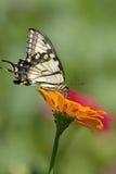 Basisrecheneinheit auf Blume Stockfotos