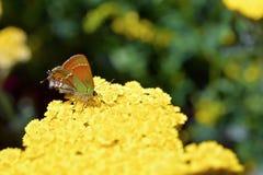Basisrecheneinheit auf Blume Lizenzfreie Stockfotografie