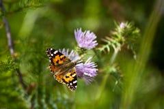 Basisrecheneinheit auf Blume lizenzfreie stockfotos