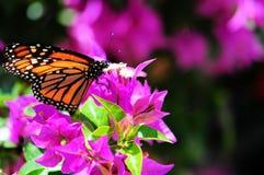 Basisrecheneinheit auf Blumen Stockfoto