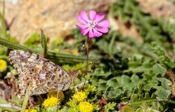 Basisrecheneinheit auf Blumen Lizenzfreie Stockfotos