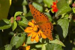 Basisrecheneinheit auf der Blume Lizenzfreie Stockfotografie