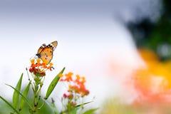 Basisrecheneinheit auf der Blume lizenzfreie stockfotos