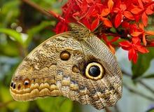 Basisrecheneinheit auf der Blume Stockbilder