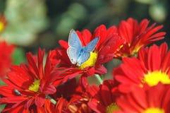 Basisrecheneinheit auf der Blume Lizenzfreies Stockfoto