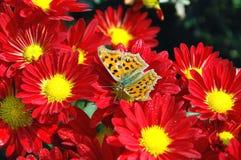 Basisrecheneinheit auf der Blume Stockfotografie
