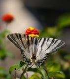 Basisrecheneinheit auf einer Blume Stockfotografie