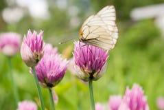Basisrecheneinheit auf einer Blume Lizenzfreie Stockfotos