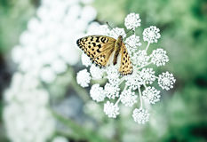Basisrecheneinheit auf einer Blume Stockbilder