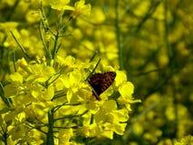 Basisrecheneinheit auf gelben Blumen Stockbilder