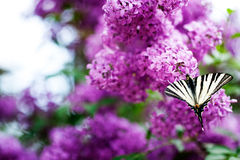Basisrecheneinheit auf lila Blumen Stockfotos