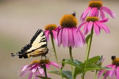 Basisrecheneinheit auf purpurroten Kegel-Blumen lizenzfreie stockbilder