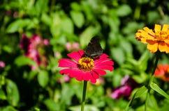 Basisrecheneinheit auf roten Blumen lizenzfreie stockfotografie