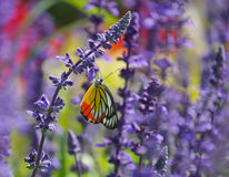 Basisrecheneinheit, die auf Blume speist Stockfoto
