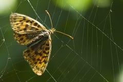 Basisrecheneinheit eingeschlossen im Spinnennetz Stockfotografie