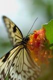Basisrecheneinheit und Blume