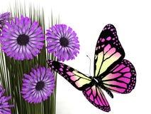 Basisrecheneinheit und Gänseblümchen Stockbilder