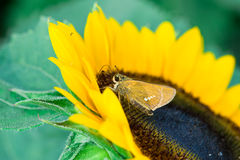 Basisrecheneinheit und Sonnenblume Stockfoto