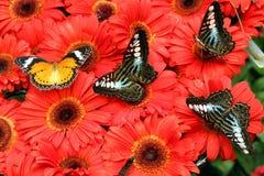 Basisrecheneinheiten auf Blumen Stockfotos