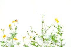 Basisrecheneinheiten und Blumen lizenzfreies stockbild