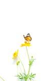 Basisrecheneinheiten und Blumen stockbilder