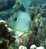 Basisrecheneinheits-Fische Stockfotografie