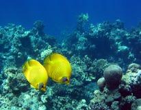 Basisrecheneinheits-Fische Stockfotos