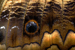Basisrecheneinheits-Flügel stockfoto