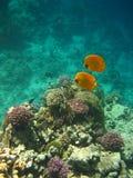 Basisrecheneinheitsfische Lizenzfreie Stockbilder
