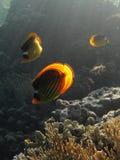 Basisrecheneinheitsfische Stockfotos