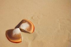 Basisrecheneinheitsshells auf dem Strand im nassen Sand Stockbilder
