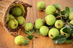 Basked of European wild pear. Stock Photos