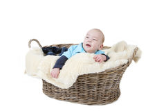 In a basket Royalty Free Stock Photo
