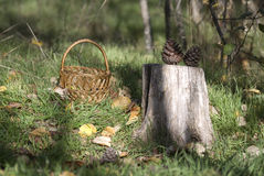 Basket. With cones costs on a grass near a stub Royalty Free Stock Image