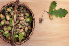 Basket with acorns Stock Photography
