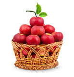 Basket of apples Stock Image